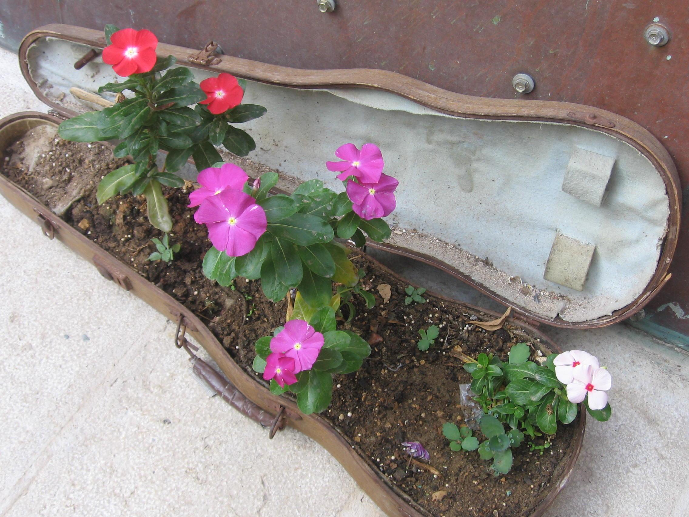 34.  flowersinviolincase